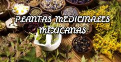 Plantas medicinales mexicanas