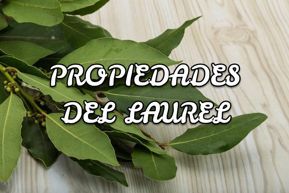 Propiedades del Laurel