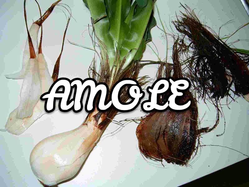 Amole