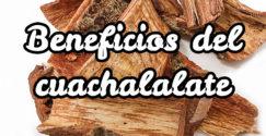Beneficios del cuachalalate
