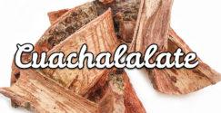 Cuachalalate