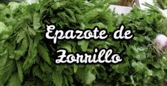 Epazote de Zorrillo