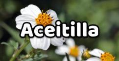 Aceitilla