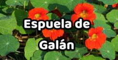 Espuela de Galán