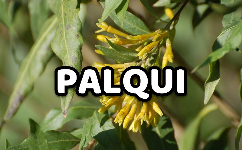 Palqui