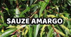 Sauce Amargo / Sauce Chileno Beneficios y propiedades