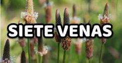 Siete Venas