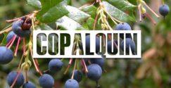 Copalquin