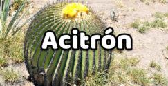Acitrón
