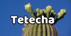 Tetecha